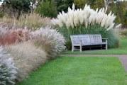 Okrasné trávy zpestří zahradu