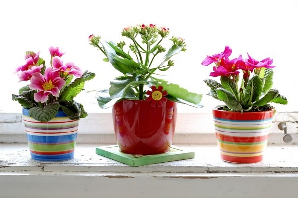 bytové květiny