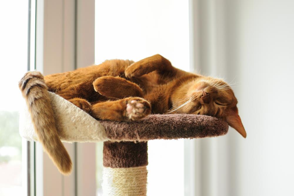 kočka v domácnosti